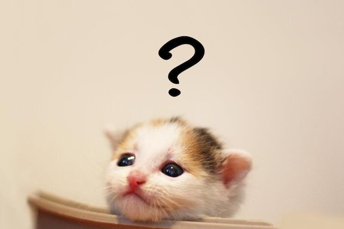 何かを考えている猫の画像