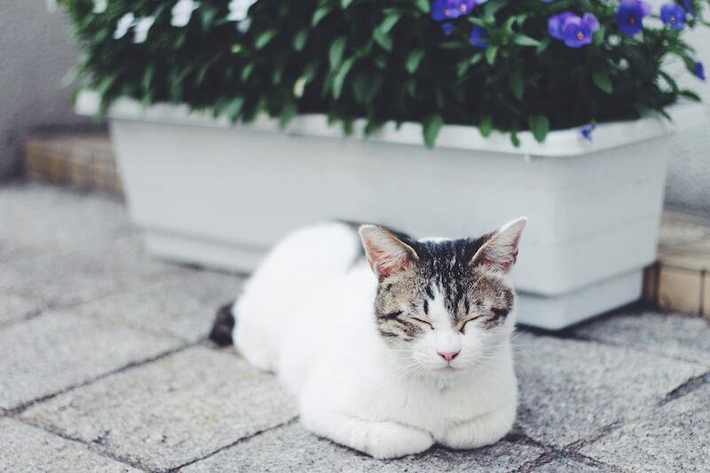 気持ちよくお昼寝している猫の画像
