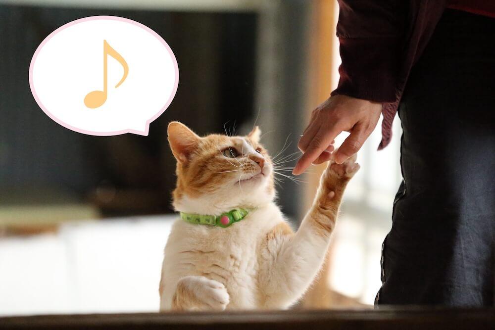 猫と飼い主が仲睦まじくしている様子の画像