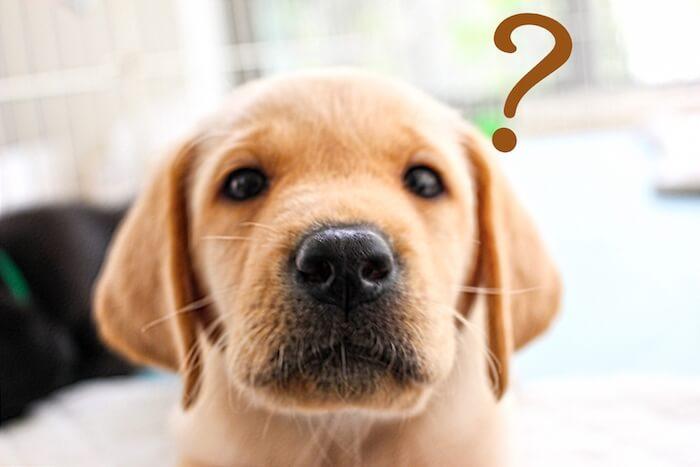 可愛い子犬が疑問を抱いている様子の画像