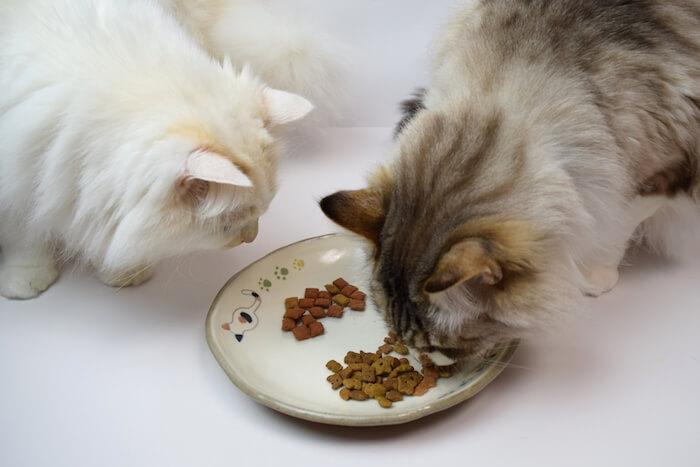 丸皿にのったフードを食べている猫2匹の画像